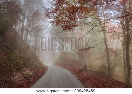 Autumn image with a colorful forest crossed by a mountain road shrouded in an October mist in Fussen Germany.