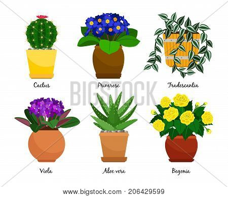 Houseplants and flowerpots. Cactus and Primrose, Tradescantia and Viola, Aloe vera and Begonia, vector illustration