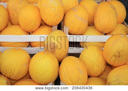 Fresh organic Honeydew Melon on Farmers Market in Catania. Sicily