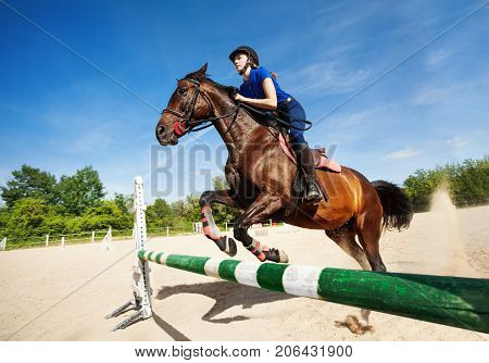 Portrait of bay horse with jockey girl jumping over a hurdle during training at racetrack