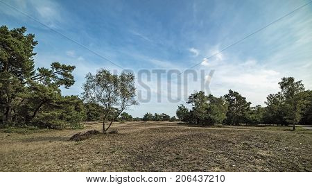 Panorama Photo Of Moorland With Trees Under Blue Cloudy Sky.
