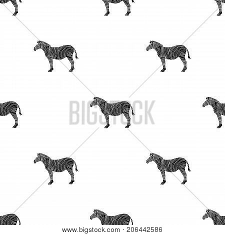 African, desert zebra. Wild cloven-hoofed animal, zebra single icon in black style vector symbol stock illustration .