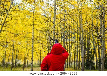 A photographer is taking picture of Aspen trees with golden leaves in Aspen Colorado.