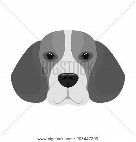 Breed dog beagle..Muzzle beagle single icon in monochrome style vector symbol stock illustration .