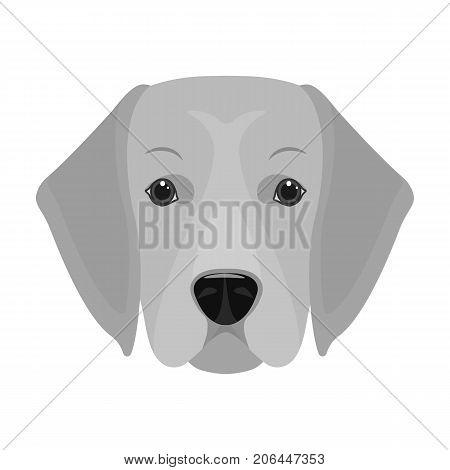 A dog breed, a golden retriever.Muzzle of the Golden Retriever single icon in monochrome style vector symbol stock illustration .