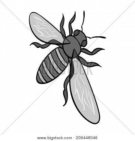 A bee, a hymenopteran insect. Stinging insect bee single icon in monochrome style vector symbol stock isometric illustration .