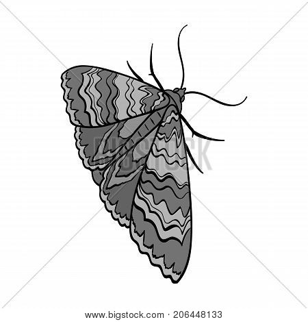 Moth, night butterfly. Insect pest moth single icon in monochrome style vector symbol stock isometric illustration .