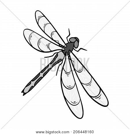 A dragonfly, a predatory insect.Dragonfly flying invertebrate insect single icon in monochrome style vector symbol stock isometric illustration .