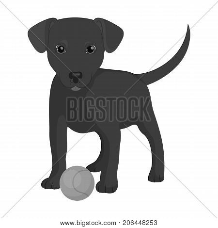 Pet, puppy dog with a ball. Pet, dog care single icon in monochromt style vector symbol stock illustration .