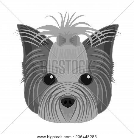 Muzzle of a pet, a hairdress dog with a bow. Pet, dog care single icon in monochromt style vector symbol stock illustration .