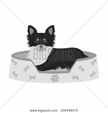 Lounger for a pet, a sleeping place. Dog, care of a pet single icon in monochromt style vector symbol stock illustration .