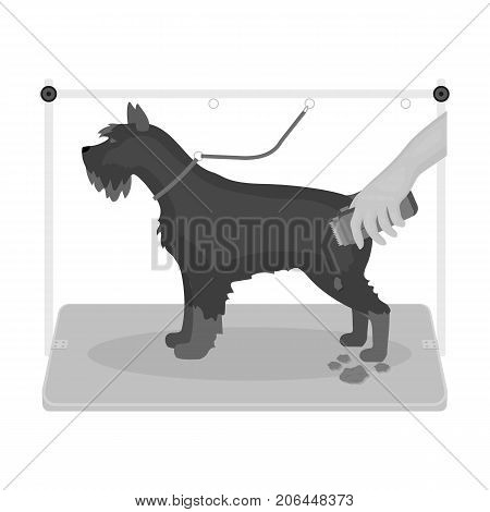 Haircut dogs in a stylish salon. Pet , dog care single icon in monochromt style vector symbol stock illustration .
