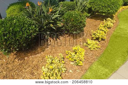 Yard landscape design with mulch for lawn care.