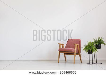 Pink Armchair And Ferns