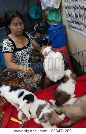 BANGKOK THAILAND - DECEMBER 22 2007 : The Chatuchak Weekend Market is the largest market in Thailand. a woman selling puppies