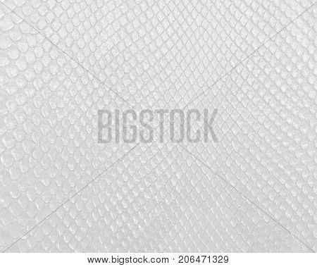 Snake skin texture in white color, modern bright white background.