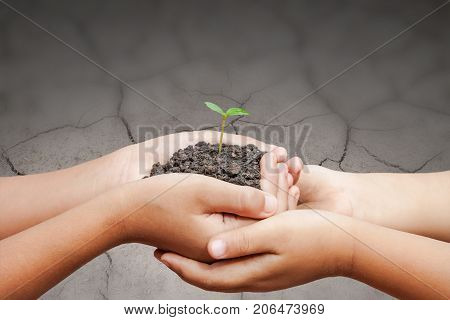 Child Hands Holding Soil With Sprout On Cracked Ground