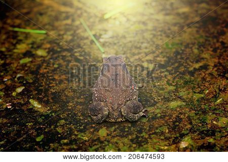 The Back Of A Brown Toad On Rough And Dirty Cement Ground With Light