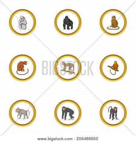 Zoo monkey icons set. Cartoon style set of 9 zoo monkey vector icons for web design