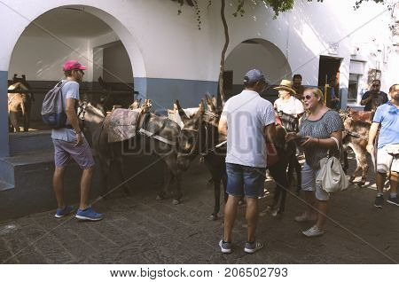 Lindos island of Rhodes Greece - 18 September 2017: Tourist animatedly talking to a donkey driver. Parking donkeys in Lindos to visit the Acropolis.
