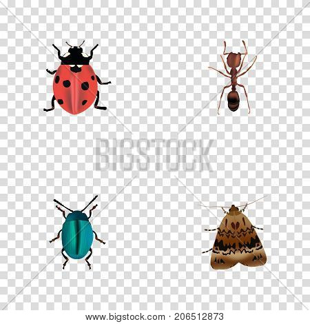Realistic Ladybird, Bug, Butterfly And Other Vector Elements