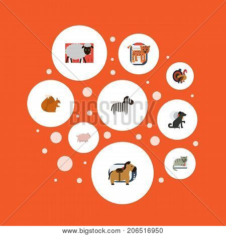 Flat Icons Pony, Mutton, Chipmunk And Other Vector Elements