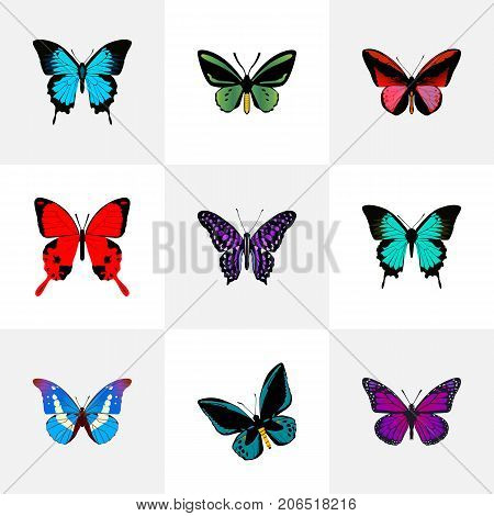 Realistic Demophoon, Papilio Ulysses, Tropical Moth And Other Vector Elements