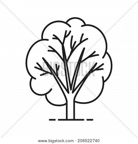 Tree linear icon. Forest, park thin line illustration. Forestry contour symbol. Vector isolated outline drawing