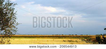 Corn Field After Harvest,
