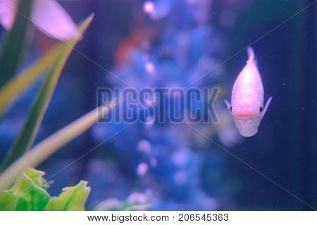 aquarium colourfull fishes in dark deep blue water.