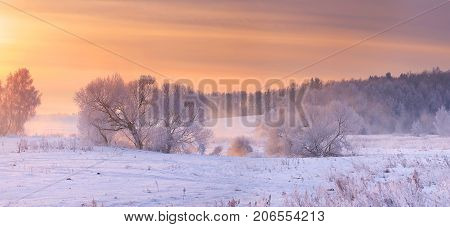 Winter background. Frosty trees in morning sunlight.Trees with white hoarfrost on snow in frosty morning.