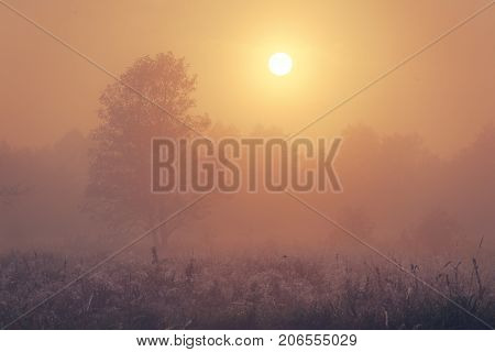 Autumn foggy morning. Sun illuminates foggy autumn nature.