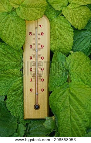 A wooden thermometer stands in the large green leaves of the plant
