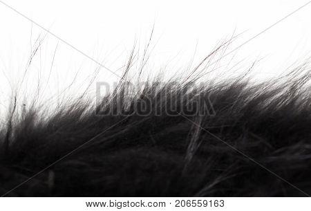 black fur on white background . Photos in the studio