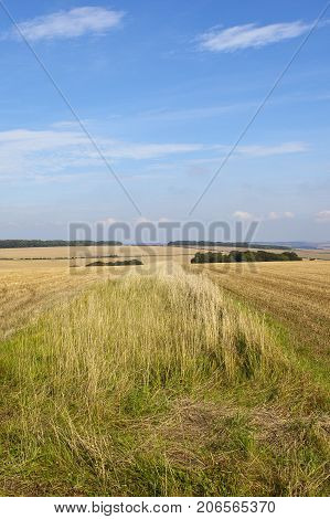 Dry Grasses And Wheat Stubble