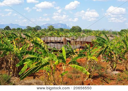 Palm tree village in Mozambique