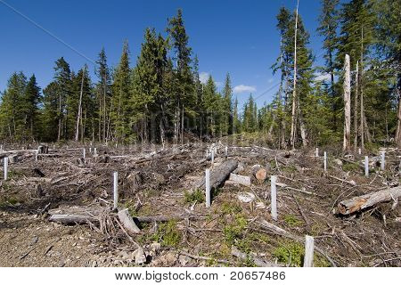 Clearcut forestry