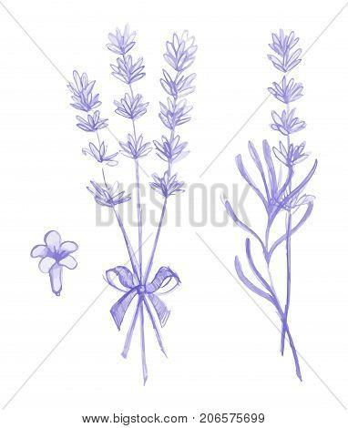 Purple lavender flowers vector hand drawn set