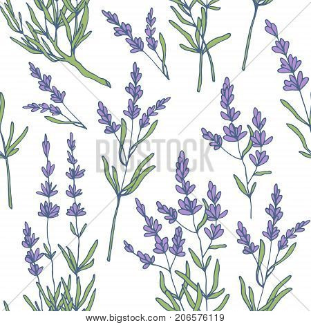 lavender seamless pattern vector, hand drawn style