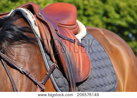 Brown saddle with blue pad on a bay horse