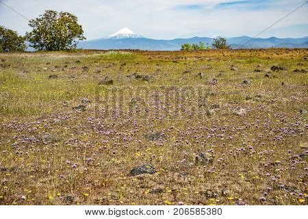 Table Rock upper trail top flat plateau view great view and foliage view of mt mcloughlin