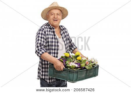 Mature gardener holding a crate filled with flowers isolated on white background