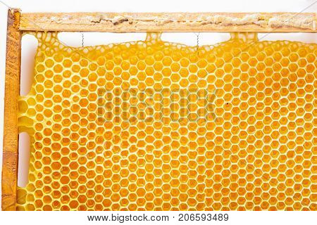Part of a frame with honeycombs on white background