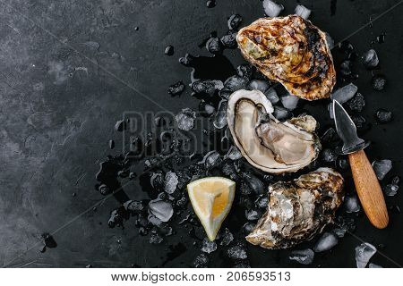 Raw open oyster with ice and lemon on a dark background. Top view. Copy space.