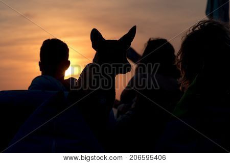 Silhouette Of Unrecognisable Man And Woman With Their Dog At Seaside On Sunset