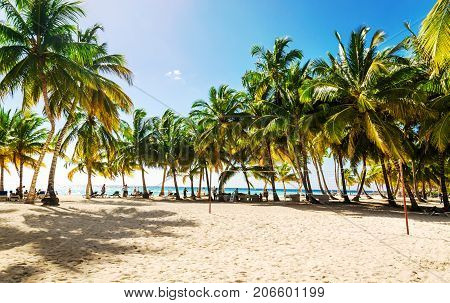 Exotic high palm trees on a wild beach against the azure waters of the Caribbean Sea, Dominican Republic, Caribbean Islands, Central America