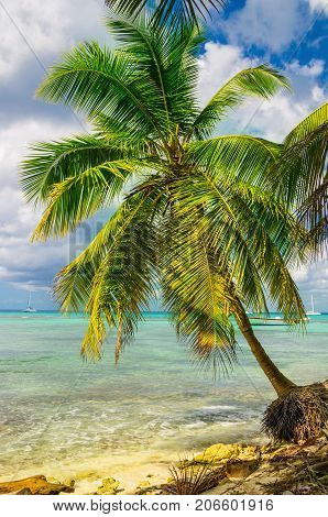 Beautiful exotic Caribbean coast with amazing palm tree, Dominican Republic, Caribbean Islands, Central America