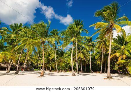 Exotic Caribbean beach full of beautiful palm trees, Dominican Republic, Caribbean Islands, Central America