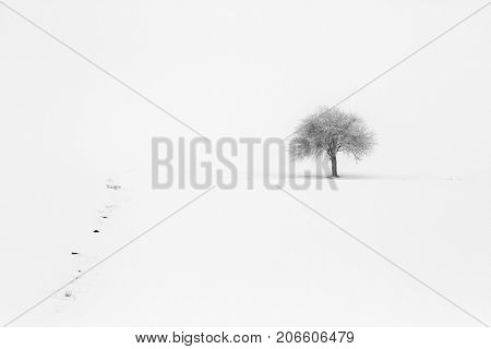 Lonely tree at winter as background for text