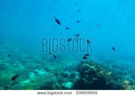 Wild life in sea. Black fish and sun rays in underwater.